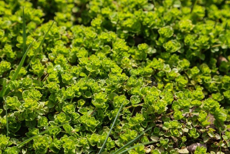Feuillage et fleurs verts un jour ensoleill? au printemps ou l'?t? images libres de droits