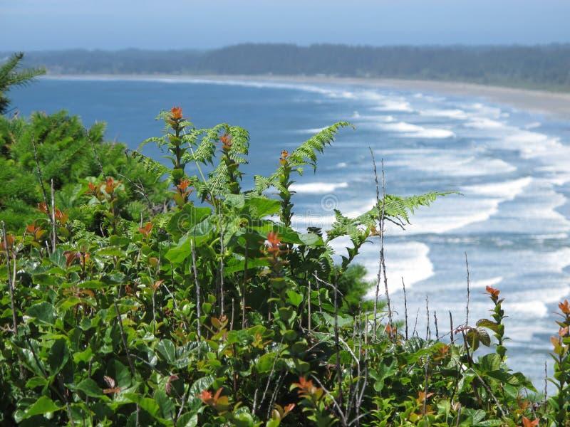 Feuillage, fleurs et conifères donnant sur le ressac flou et la plage de la Californie du nord photos stock