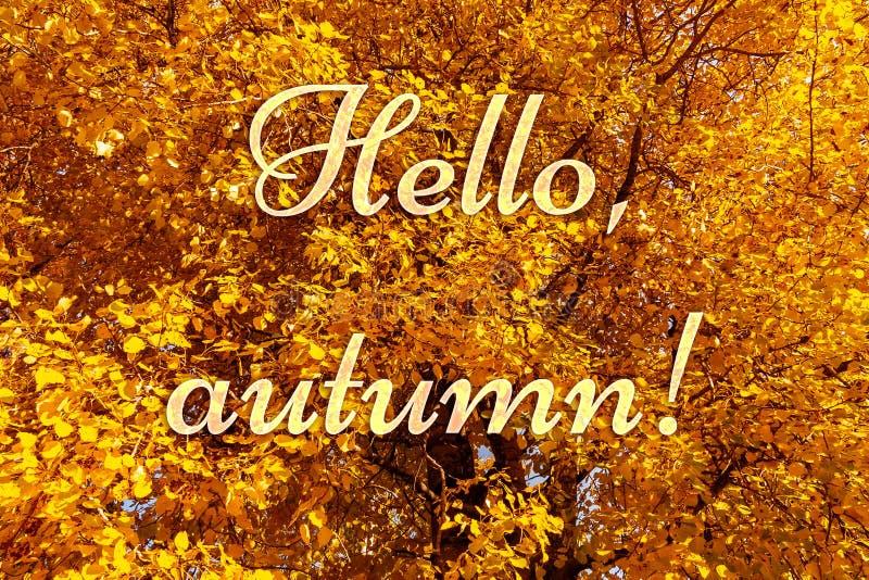 Feuillage jaune-orange coloré des arbres d'automne dans la forêt et textoter bonjour, automne photo libre de droits