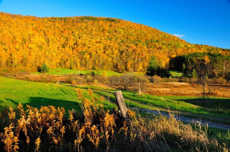 Feuillage maximal d'automne photos libres de droits