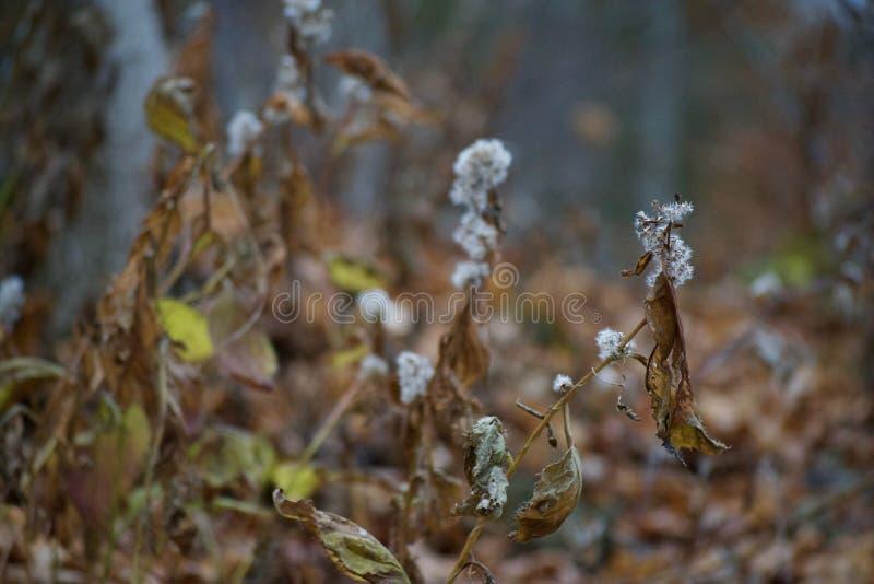Feuillage morne d'automne le long de Bruce Trail photographie stock libre de droits