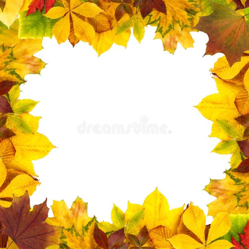 Feuillage naturel d'automne d'isolement sur le fond blanc Concept saisonnier de d?coration et de construction image libre de droits