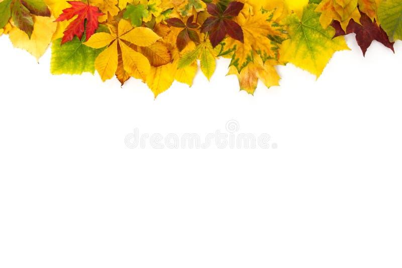 Feuillage naturel d'automne d'isolement sur le fond blanc Concept saisonnier de d?coration et de construction photos libres de droits