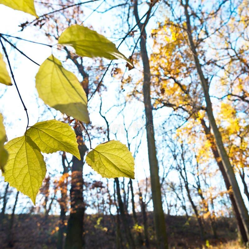Feuillage sec dans la forêt photos stock