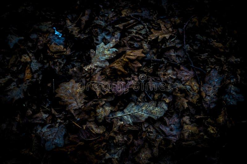 Feuillage tombé et trempé d'automne photo stock