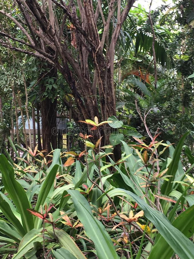 Feuillage tropical images libres de droits