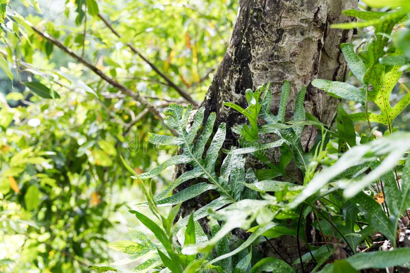 Feuillage, usines et feuilles tropicaux sur le sentier de randonnée en parc national de Haleakala Maui, Hawaï photographie stock libre de droits