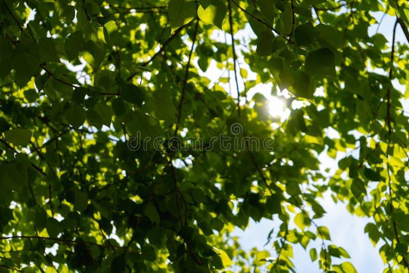 Feuillage vert épais des arbres image libre de droits