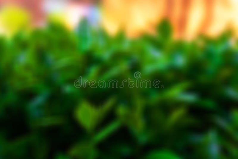 Feuillage vert avec un jour ensoleill? photographie stock libre de droits