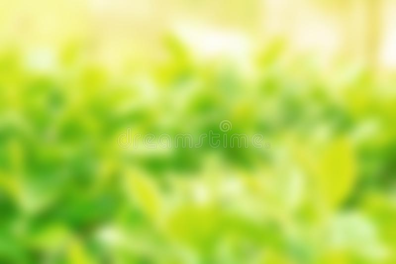 Feuillage vert avec une journée de printemps ensoleillée Fond brouill? images libres de droits