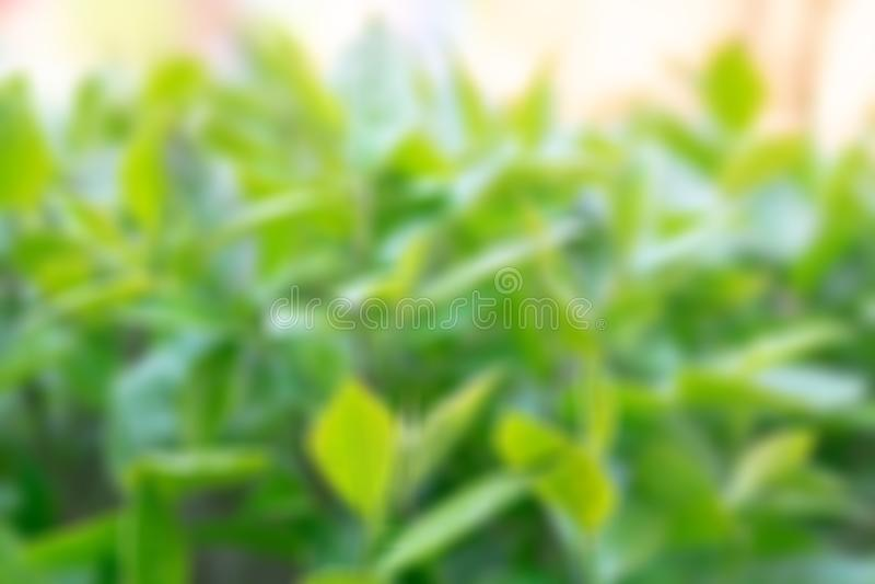 Feuillage vert avec une journ?e de printemps ensoleill?e photographie stock