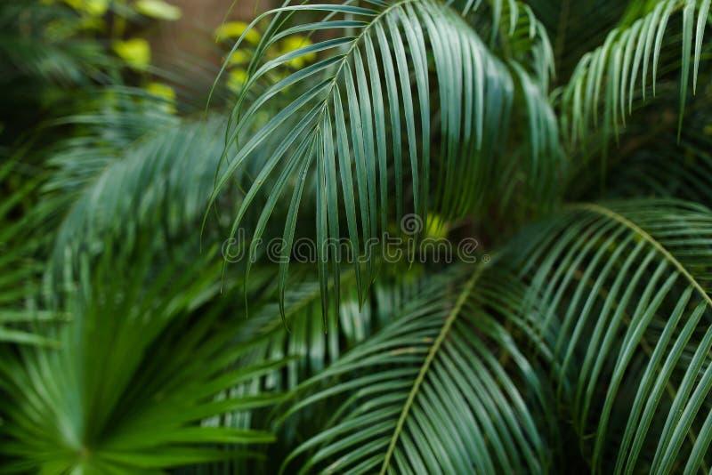 Feuillage vert exotique dans les reainforests images stock