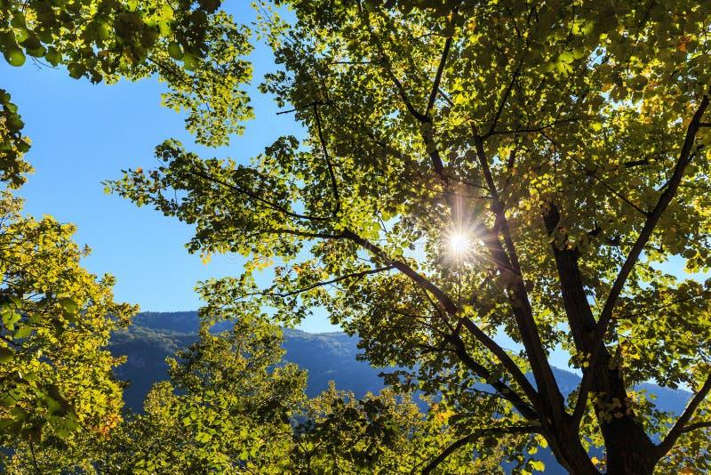 Download Feuillage vert vibrant image stock. Image du gouttelette - 45364239