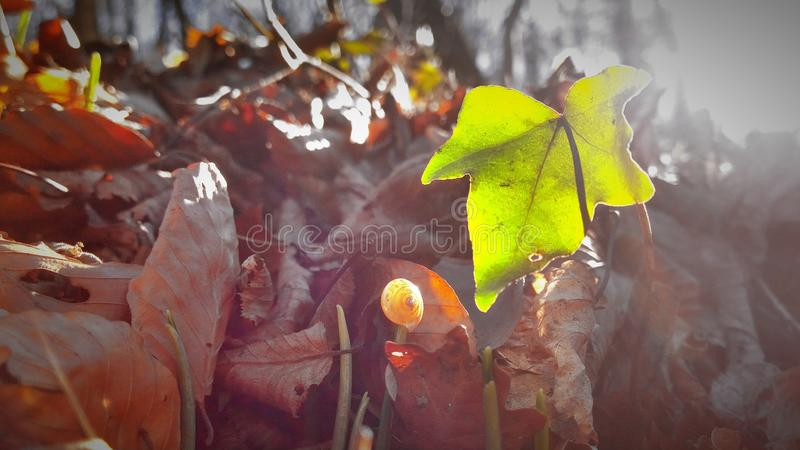 Feuille photographie stock