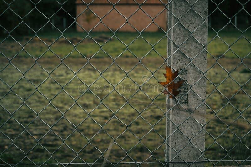 Feuille attrapée dans une barrière photographie stock