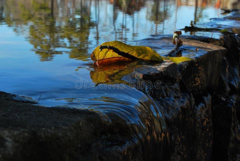 Feuille au-dessus de l'eau préoccupée photo libre de droits