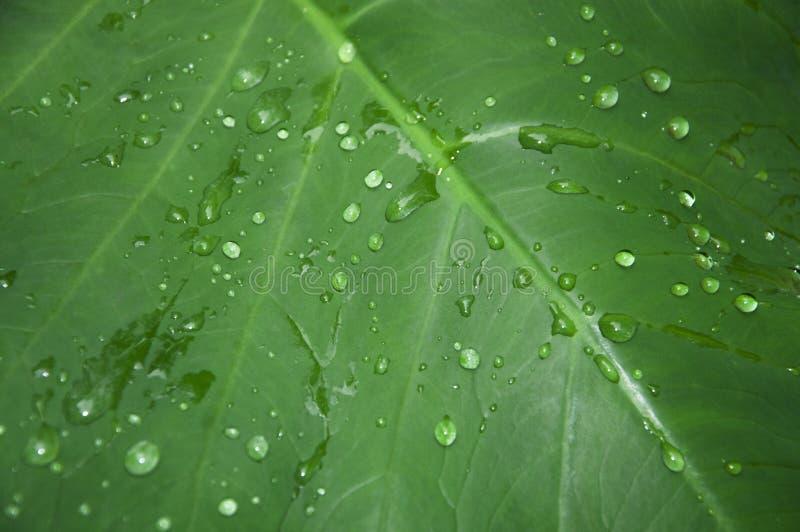 Feuille avec des baisses de pluie photos stock