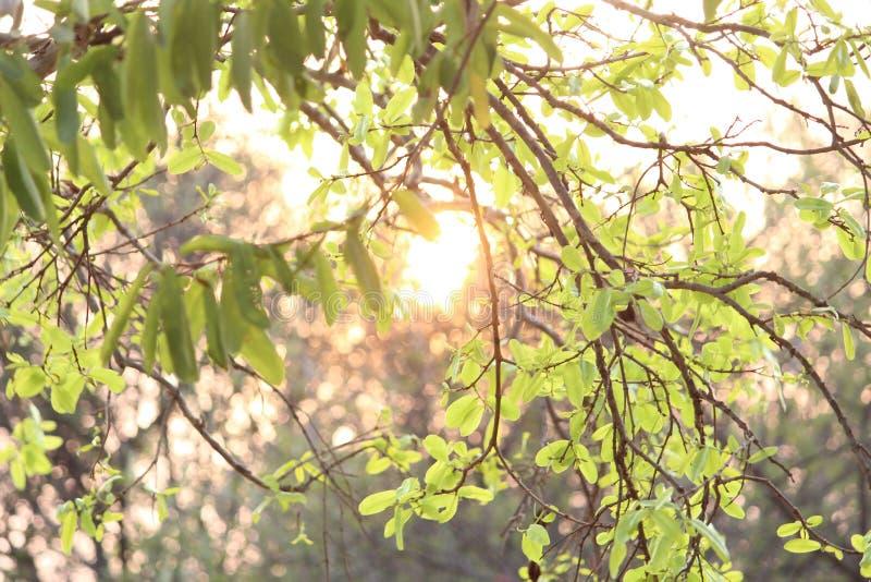 Feuille avec la lumière du soleil photo libre de droits