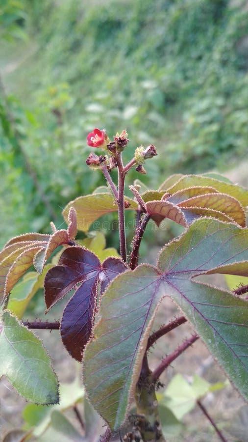 Feuille brune de plantes vertes photographie stock