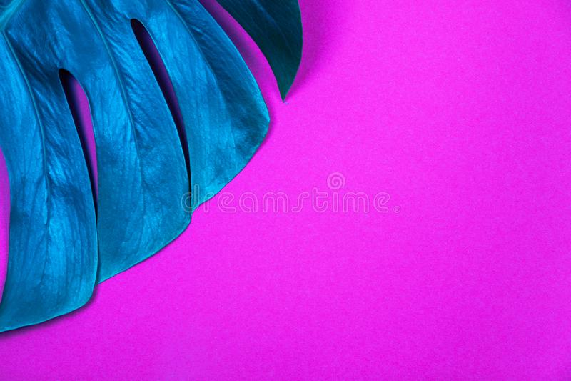 Feuille color?e au n?on de monstera de vert de plante tropicale sur le fond violet rose en plastique acide photographie stock