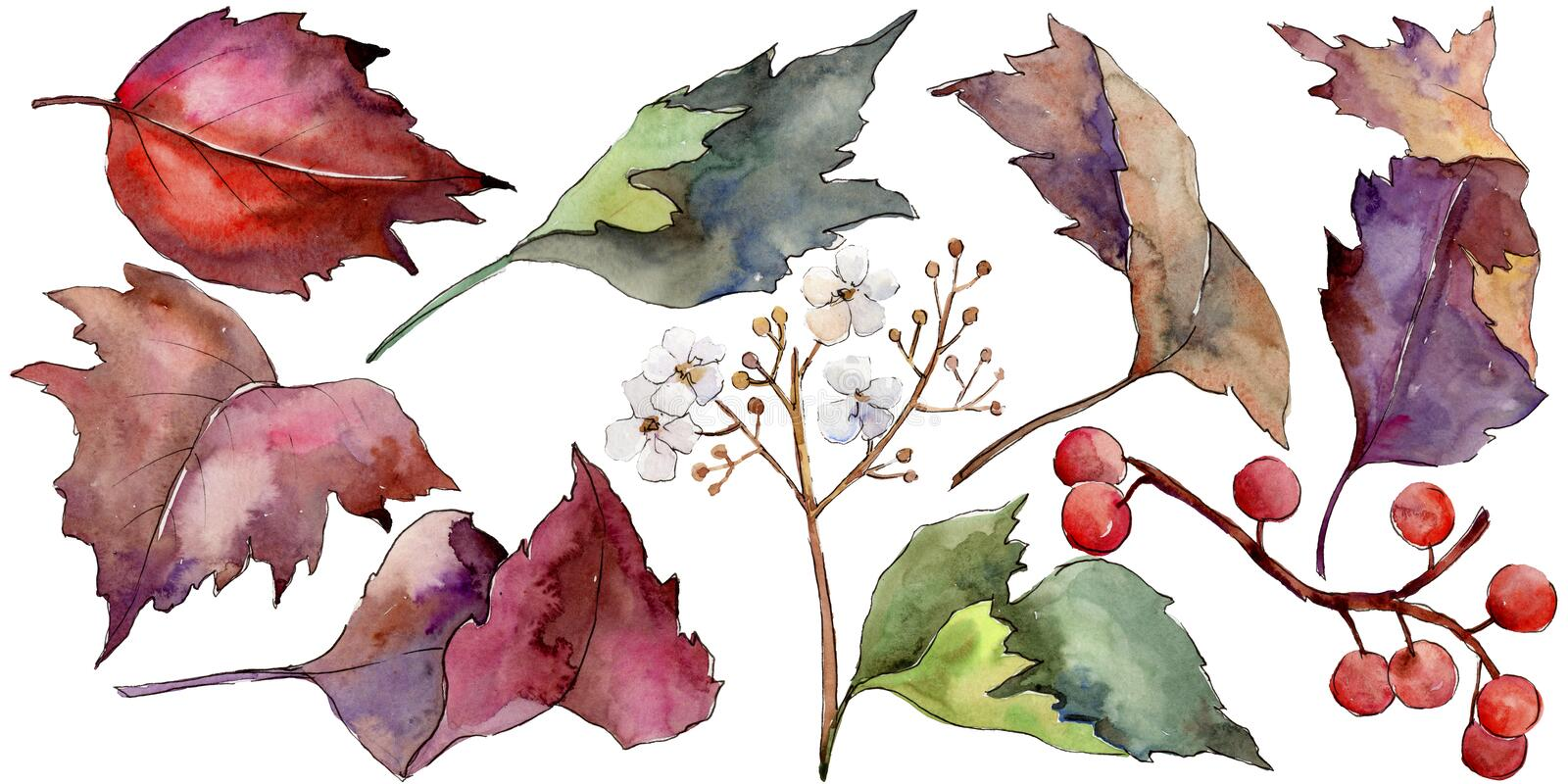 Feuille colorée de viburnum d'aquarelle Feuillage floral de jardin botanique d'usine de feuille Élément d'isolement d'illustratio illustration de vecteur