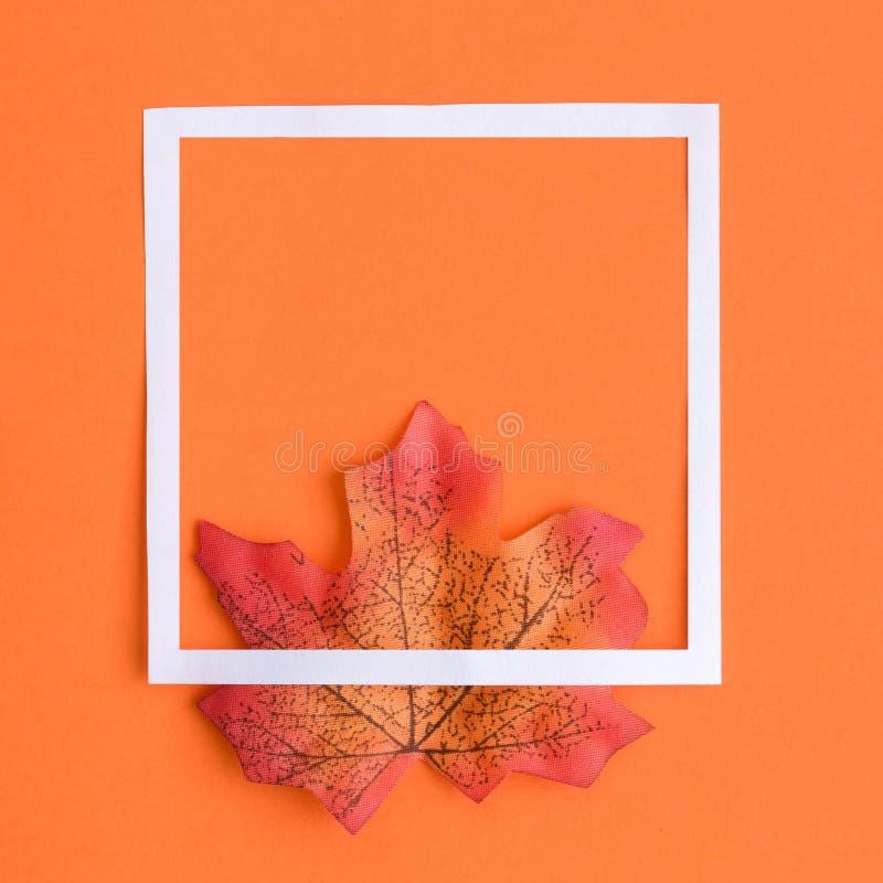 Feuille d'érable colorée avec le cadre blanc en tant qu'abrégé sur symbole d'automne photo stock