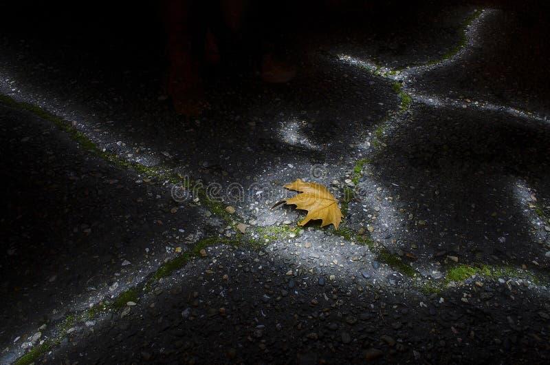 Feuille d'érable de Brown la nuit image stock