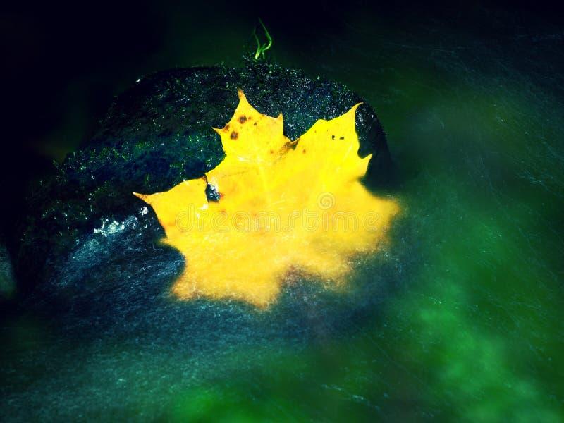 Feuille d'érable jaune dans la rapide Feuilles tombées sèches images stock