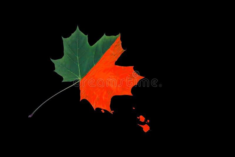 Feuille d'érable lumineuse décorée des peintures sur le fond noir Conception créative d'automne image libre de droits