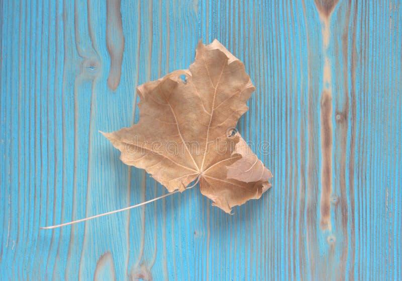 feuille d 39 rable s che d 39 automne sur le fond en bois herbier contexte original artistique photo. Black Bedroom Furniture Sets. Home Design Ideas