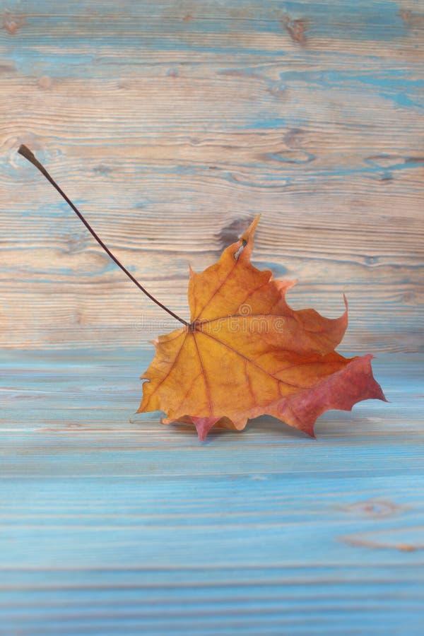 feuille d 39 rable s che d 39 automne sur le fond en bois herbier contexte original artistique l. Black Bedroom Furniture Sets. Home Design Ideas