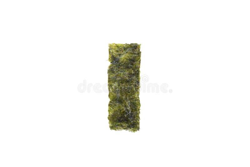 Feuille d'algue photo stock