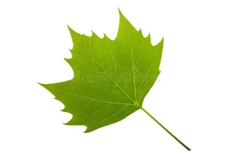 Feuille d'arbre plat images libres de droits