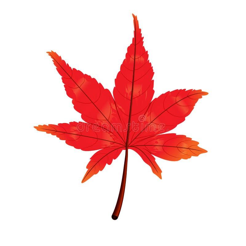 Feuille d'automne, feuille d'érable d'automne d'isolement sur le fond blanc, illustration de vecteur illustration de vecteur
