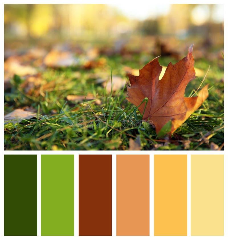 Feuille d'automne sur l'herbe verte sur le fond brouillé photographie stock libre de droits