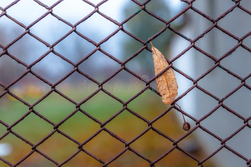 Feuille d'automne sur un grillage images libres de droits