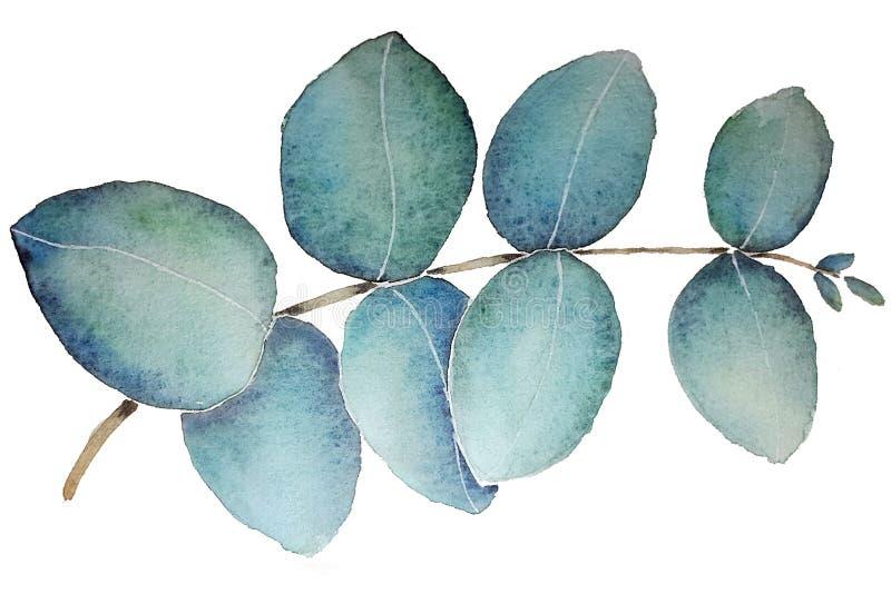 Feuille d'eucalyptus avec l'aquarelle illustration de vecteur