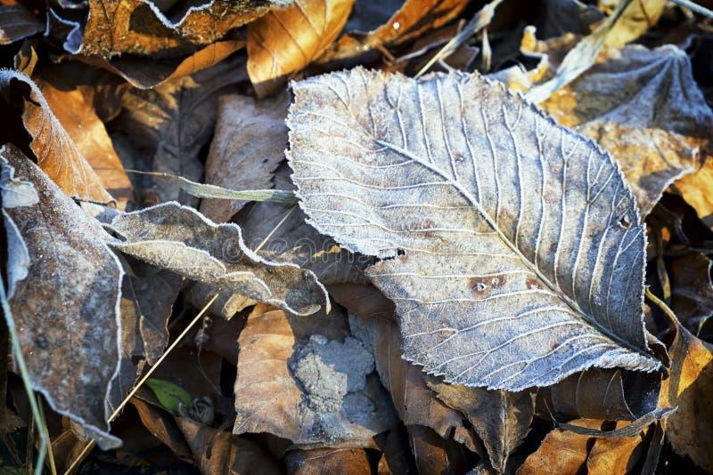 Feuille d'hiver photo libre de droits