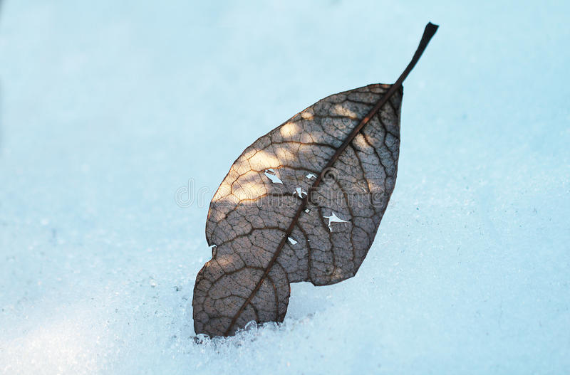 Download Feuille dans la neige image stock. Image du objet, chêne - 77162293