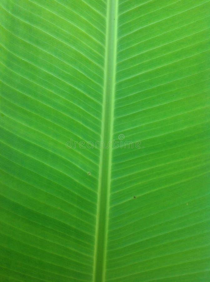 feuille de banane photo libre de droits