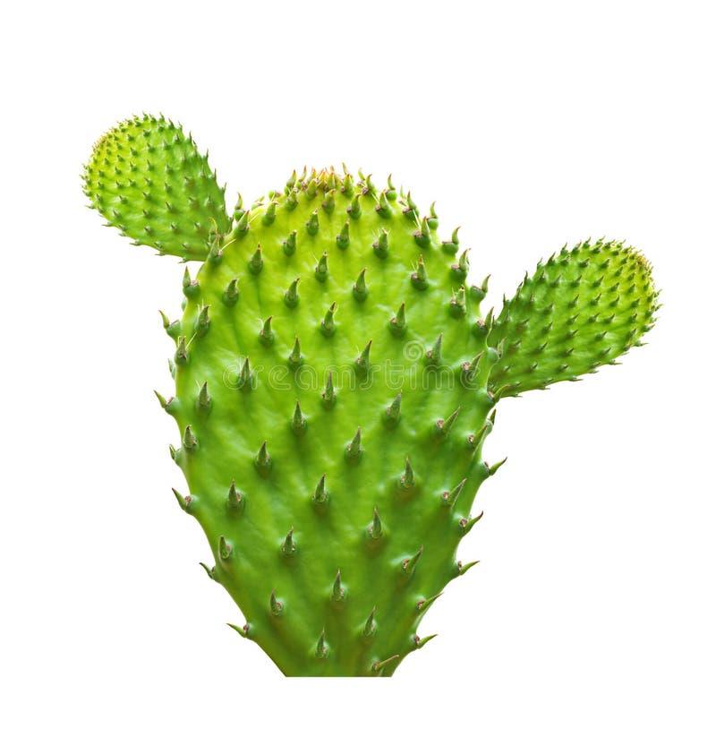 Feuille de cactus d'isolement photos stock