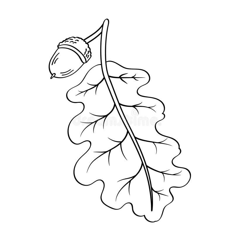 Feuille de chêne avec des graines illustration de vecteur