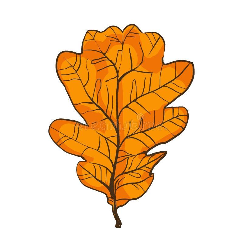 Feuille de chêne, bosquet à feuilles caduques, arbre avec la couronne dense illustration libre de droits