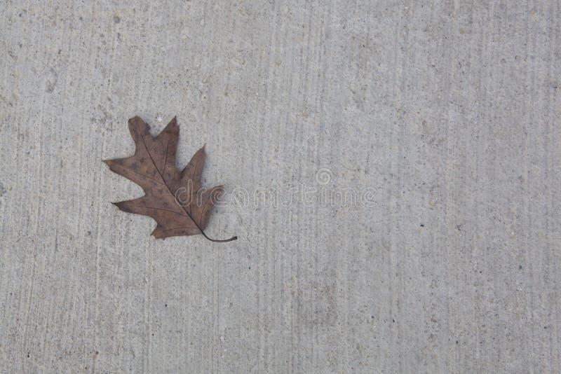 Feuille de chêne sur Gray Concrete Background photographie stock libre de droits