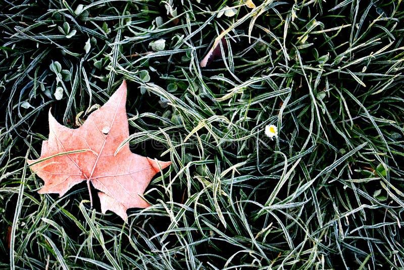 Feuille de gelée sur l'herbe verte au printemps photos stock
