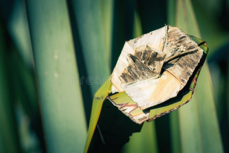 Feuille de lin du Nouvelle-Zélande tissée dans une fleur photo stock