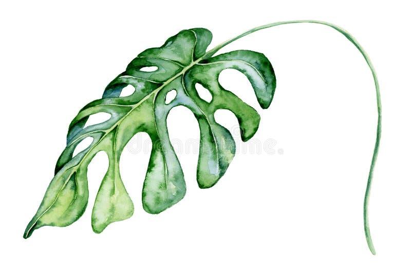 Feuille de monstera d'aquarelle Illustration de plante tropicale illustration de vecteur
