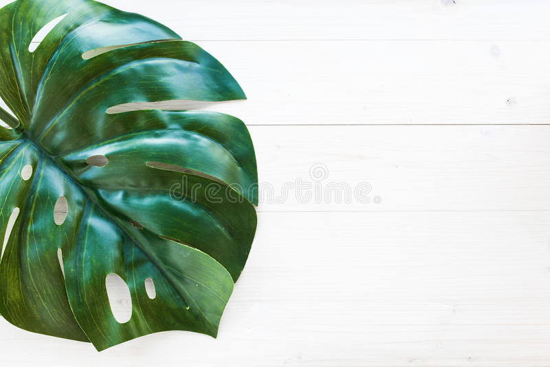 feuille de monstera sur le fond en bois photos libres de droits