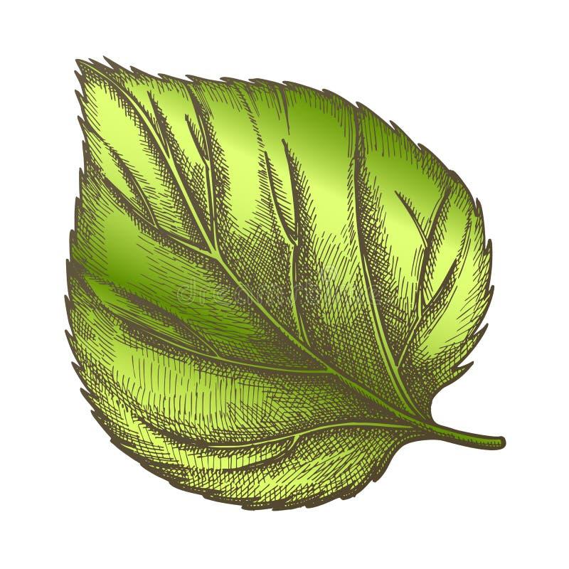 Feuille de nature de couleur de plan rapproché herbacé d'usine d'houblon illustration stock