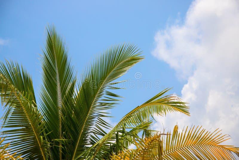 palmier r